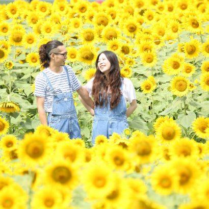 松本大学 ひまわり畑